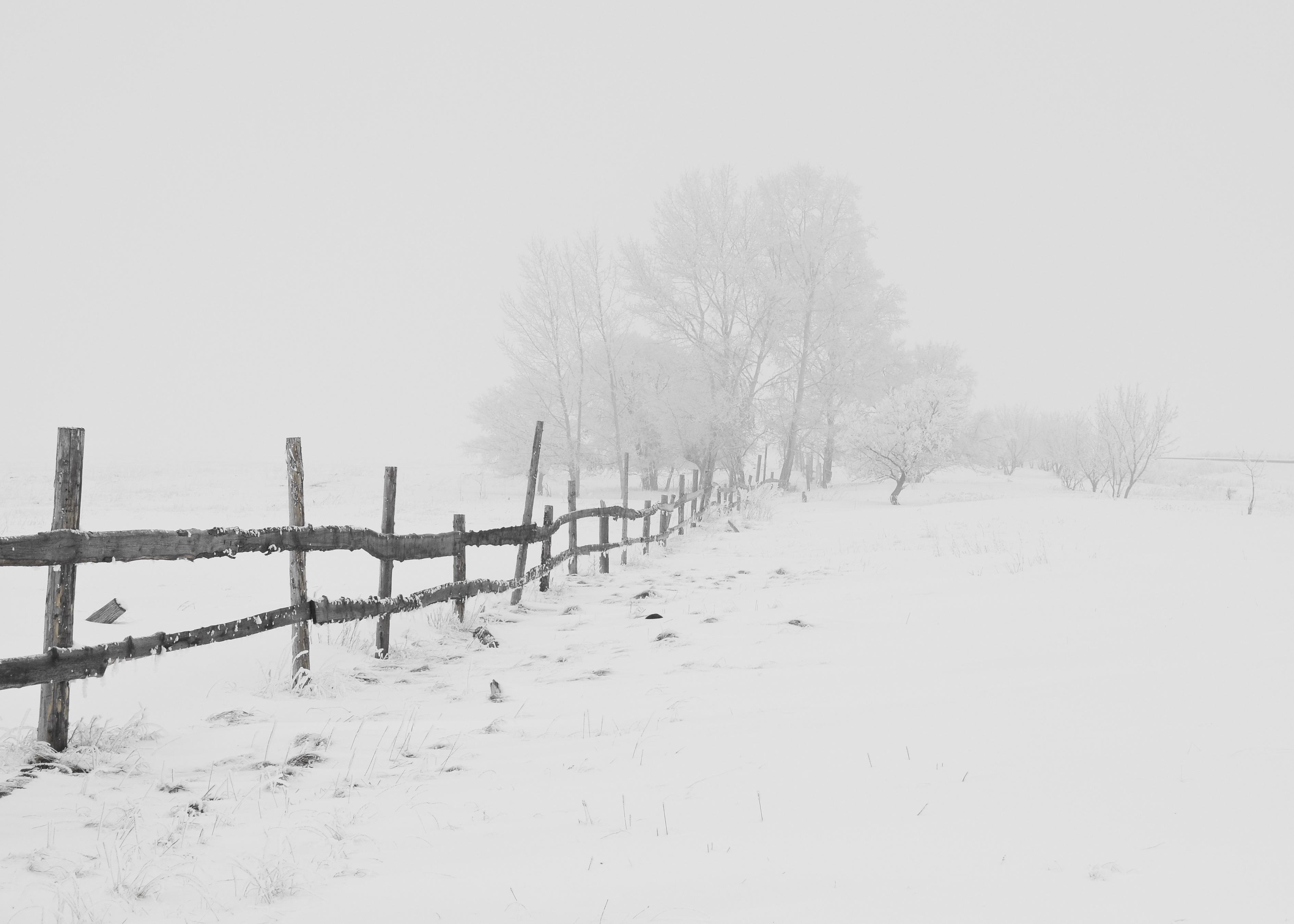 Winter solitary fenceline