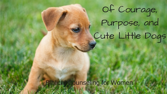 Of Courage, Purpose, and Cute Little Dogs